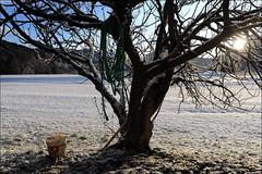 fico, neve e sole (giulianoboiti) Tags: snow art abandoned trash rural landscapes fineart paesaggio fico colza