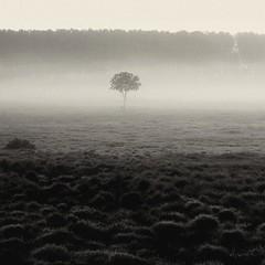 L'arbre (Instantsmagic) Tags: landscape paysage campagne arbre brume