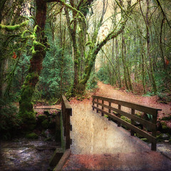 Goldstream Park (ZedZaP) Tags: bridge trees forest woods path goldstream enchantedforest zedzap