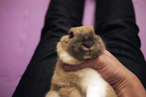 兔-NANA_15