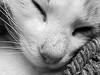 Nas (Juan Antonio Capó) Tags: blancoynegro animal cat blackwhite kat feline chat fuji bn gato felino katze mace 猫 gatto חתול kot gat kočka kedi kissa köttur mačka kucing x10 pusa mèo moix گربه кошка 고양이 minino γάτα мачка котка pisică blackwhitephotos แมว قط кішка 잭 קאַץ վալետ िल्ली fujifilmx10 fujix10