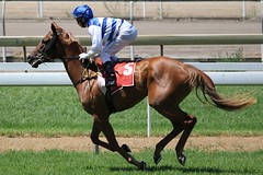"Paul Hammersley on ""Cooloola"" (A Shot Of Sport) Tags: horse brisbane racing jockey horseracing races cooloola eaglefarm brisbaneracingclub"