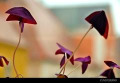 the world's best photos of pupur - flickr hive mind, Moderne deko