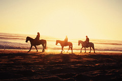golden years (Esben Bg) Tags: chile light sunset horses sun silhouette america golden warm south setting
