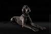 Marketing-photo-shoot-2 (Rob Orthen) Tags: dogs koiria roborthenphotography mainoskuvaus koirakuvaus
