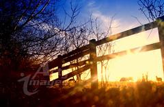 Sun Setting (Neil Wharton) Tags: sunset canon 7d northyorkshire 2012 clevelandhills osmotherley neilwharton wwwartyimagescouk micarttttworldphotographyawards micartttt michaelchee