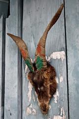 (Michał Olszewski) Tags: nepal mammal asia horns goat land himalayas acap gandaki kaski annapurnaconservationarea annapurnaconservationareaproject