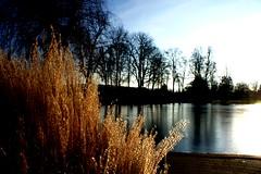 sunny afternoon (vuokkopeter) Tags: winter sun germany deutschland talvi sonne aurinko saksa badhersfeld vpu1 rememberthatmomentlevel1 rememberthatmomentlevel2 rememberthatmomentlevel3 vpu2