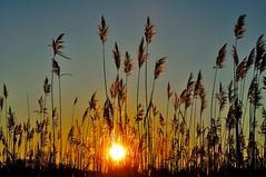 Sunrise on the Marsh........ (l_dewitt) Tags: morning winter sky sun grass sunrise nikon connecticut january newengland marsh northeast 2012 southeastern d5000 mygearandme mygearandmepremium mygearandmebronze mygearandmesilver mygearandmegold