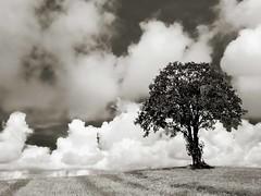 LLE : paysage  la faon Ansel Adams. (A tribute to Ansel Adams - landscape