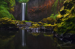 Jurrasic Park (Gary Randall) Tags: oregon creek waterfall silverton scottsmills abiquacreek abiquafalls dsc70882