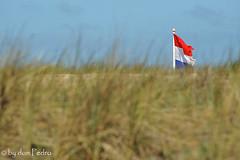bevrijdigsdag-2016 (Don Pedro de Carrion de los Condes !) Tags: feest holland strand de dunes nederland zee duinen noordwijk donpedro kust vlag voorjaar driekleur 5mei bevrijding d700 vaderland