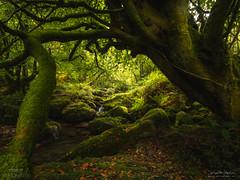Framed Forest (diegogm.es) Tags: autumn espaa verde green forest spain asturias olympus colores bosque otoo omd piloa espinaredo em5markii