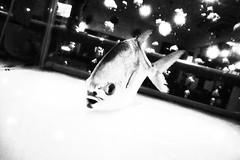 R0020876 (kenny_nhl) Tags: street shadow blackandwhite bw fish black monochrome dark blackwhite shot streetphotography surreal scene snap explore malaysia visual ricoh provoke grd explored streephotography grd4 grdiv