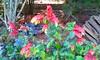 20150822_144404 (Megaolhar) Tags: flores toy flickr do dia vale paulo apa bom inverno são campos facebook tuka jordão paraíba fazendinha 2016 youtube ibama twitter jardinagem bioma gomeral