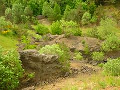 Steinbruch-Brache (Jrg Paul Kaspari) Tags: spring die eifel frhling steinbruch brach 2016 vulkaneifel manderscheid pioniervegetation bergkraterseetour