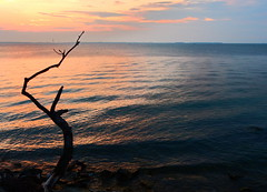 Sunset and Branch (nelhiebelv) Tags: island lakeerie cloudsstormssunsetssunrises