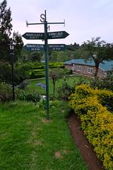 Heritance Tea Factory, Kandapola, Nuwara Eliya, Sri Lanka (maddalena monge) Tags: teaplantation liptontea goldentulipstea srilanka ceylon