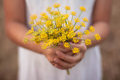 I am (Nathalie Le Bris) Tags: flower love nature fleur yellow jaune children dof child hand bokeh amor main flor amarillo amour mano campo enfant campagne fenouil lodefotos fridaymelodiesphotos 7dwf reto191