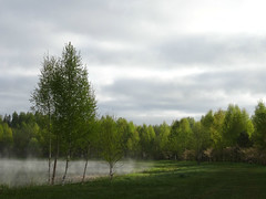 Morningmist above the water (heiliruutel) Tags: morning trees mist nature water spring greenery birch