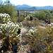Group hiking through some cholla cactus
