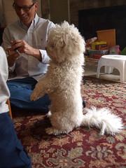 thanksgiving family dog