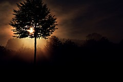 Autumn...morning mood... (rolfspicture) Tags: autumn light sun tree nature misty sunrise landscape rays sunrays sauerland musictomyeyeslevel1 olsbergbruchhausen