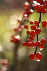 Berry Good (secondhobby) Tags: light red usa green nature water rain canon drops berries bokeh