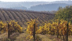 Toscana 46 (lotti roberto) Tags: autumn color tree alberi landscape outdoor tuscany toscana autunno paesaggio collina mygearandme blinkagain bestofblinkwinners