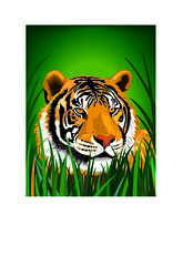 Adobe Illustrator Tiger (Grafixsalsero) Tags: