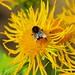 Nectar - P6023809