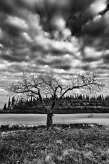 Black tree (Li'l Bad Wolf) Tags: landscape lago nikon garda tramonto nuvole tokina1224 tokina fotografia autunno bianco nero biancoenero temporale lagodigarda veneto nubi costermano d300s