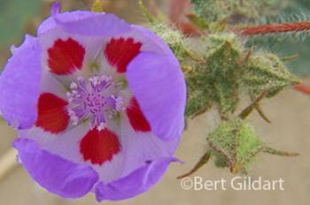Open petals reveal hidden beauty
