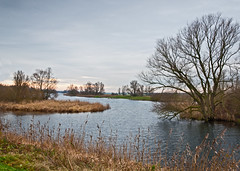 Dutch National Park De Biesbosch in winter (RuudMorijn) Tags: park morning travel autumn trees winter light sunset wild sky sun lake plant holland reflection tree green fall reed nature water netherlands ecology dutch grass yellow clouds rural forest river season landscape outside outdoors countryside pond bomen flora scenery colorful europe quiet peace view natural outdoor pastel background bare herfst scenic reserve peaceful nobody scene calm foliage national silence environment serene picturesque idyllic kale brabant tranquil atmospheric biesbosch noordbrabant werkendam northbrabant kleurig nationaal natuurpark brabantse