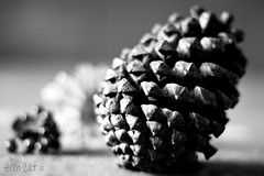 Day 351 Christmas Pine Cone (~Helen Cat) Tags: christmas bw flower mono blackwhite pin december berries dof cone bokeh day351 herewegoagain 365project 351265 171211 2011inphotos