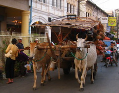 The streets of Siem Reap (Py All) Tags: street city cow asia cambodge cambodia southeastasia asie char siemreap angkor rue ville vache asiedusudest