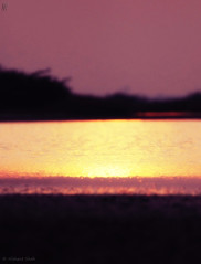 Liquid Gold! (....NishanT....) Tags: sunset processed kutch goldenwater 30mmf28 littlerann tc17 nikond90