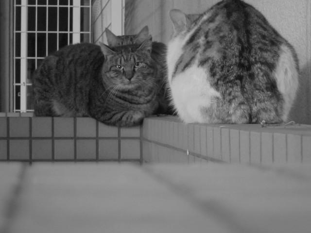 Today's Cat@2011-12-22