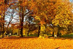 Autumn in Munich (picmasta) Tags: autumn english fall nature garden munich mnchen bayern deutschland bavaria herbst natur orte garten sonstige englischer 2011 motiv laubbaum november2011 bumetreetreesorangerotgelbhimmelblauer