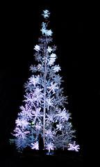 Christmas Eve in Washington (Lea and Luna) Tags: christmas street eve urban tree night 35mm silver snowflakes lights washingtondc dc washington districtofcolumbia nikon song streetphotography christmastree georgetown nikkor lr lightroom 35mmf18 d5100 maurasullivan christmaseveinwashington