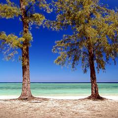 """Guardian"" (helmet13) Tags: d80 raw mauritius pinetree beach silence tropics landscape sunshine bluesky deserted emptiness aoi peaceaward platinumpeaceaward platinumheartaward 100faves world100f gettyimages indianocean heartaward simplicity"