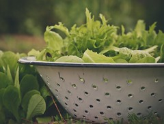 fresh and exciting (~Staci Lee~) Tags: white green canon 50mm raw lettuce colander winterlettuce wevs 50with50 cararosepreset