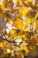 Otoo: color dorado (Hada Marina) Tags: otoo hojassecas colordorado