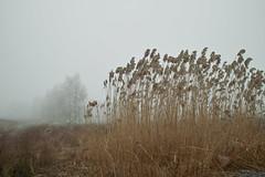 ane (Nadezhdakn) Tags: winter fog sigma dp1 ane