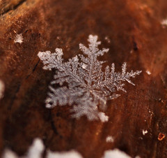 Snowflake on Wood (BKHagar *Kim*) Tags: snowflake snow macro snowflakes al 1st south alabama tubes january athens elkriver limestonecounty january12 bkhagar