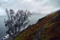 On the way to Camasunary (supersky77) Tags: skye scotland isleofskye birch cuillins betula ecosse scozia elgol skotland scavaig betulla camasunary lochscavaig