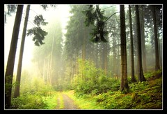 nach Hause - going home (NPPhotographie) Tags: wood light sun mist tree art nature fog forest sunrise germany way path magic creative dust magical oberberg idream micarttttworldphotographyawards micartttt ringexcellence musictomyeyeslevel1