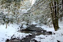 (Care_ Bear_ 76) Tags: trees winter vacation usa snow nature water landscape fishing scenery rocks hiking westvirginia traveldestinations randolphcounty staycations carolynpostelwait