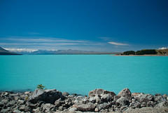 Last Look! (Jocey K) Tags: flowers blue newzealand lake snow mountains clouds rocks southisland lakepukaki