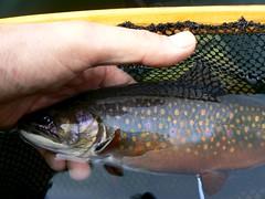 P1080274 (Upstate Dave) Tags: fish fishing adirondacks flyfishing floattube brooktrout